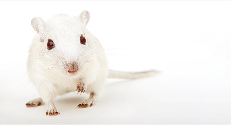 Curso Pós-Graduado de Atualização de Ciências em Animais de Laboratório – Categoria B (4.ª edição)