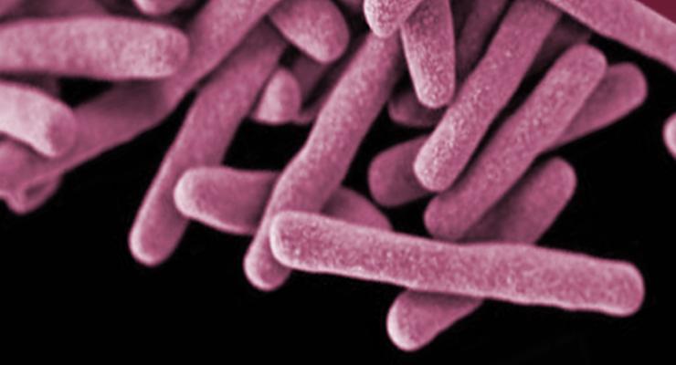 II Simpósio de Investigação em Tuberculose e Micobactérias Não Tuberculosas em Portugal