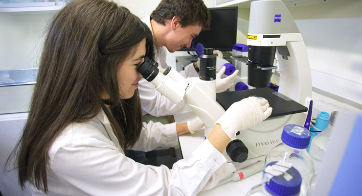 Doutoramento em Farmácia 2020/2021 | 1.ª Fase de Candidaturas