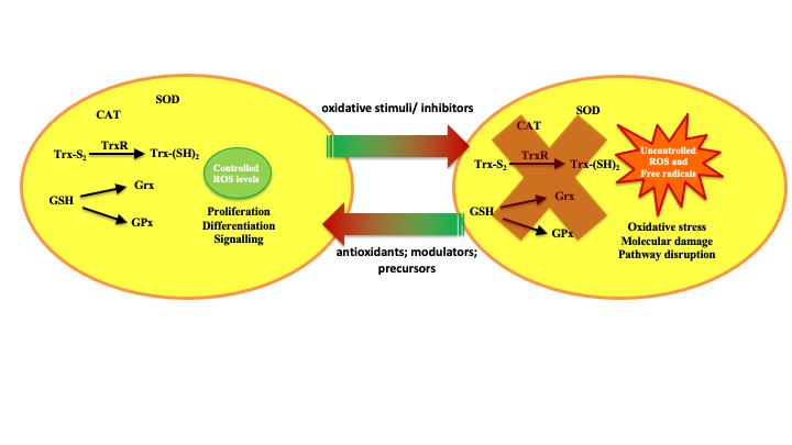 "Curso Avançado de Doutoramento ""Redox signaling and redox systems in Health and Disease: Implications for drug design and development"""