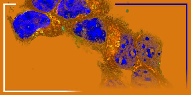 """Curso Avançado de Doutoramento """"Stem Cell Technologies"""""""